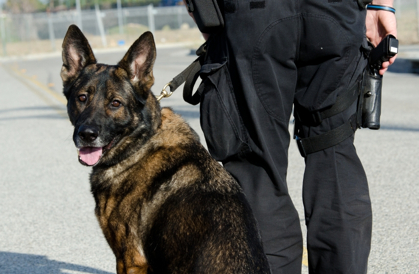 A Short History of Police Dog Training