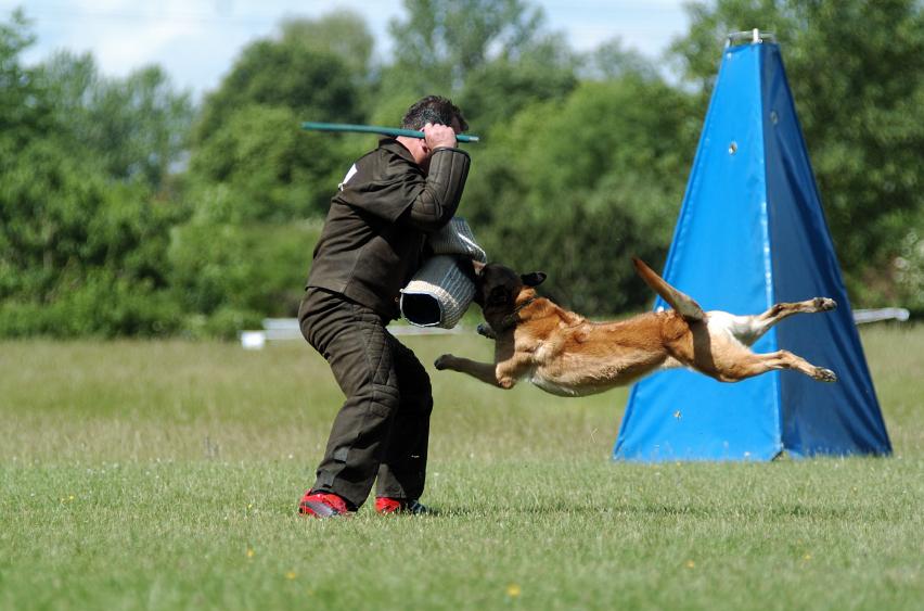 Guard Dog vs Protection Dog